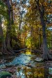 Feuillage d'automne de début de la matinée sur la crique de Cibolo, le Texas photos libres de droits