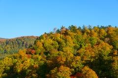 Feuillage d'automne de Mt Hachimantai Image libre de droits
