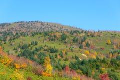 Feuillage d'automne de Mt Hachimantai Image stock
