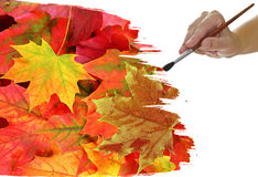 Feuillage d'automne de peinture de main Photographie stock libre de droits