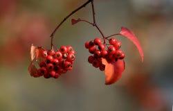 feuillage d'automne de ville New York photographie stock