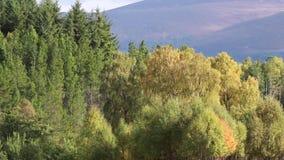 Feuillage d'automne des jaunes et des rouges pendant l'automne dans les pierres de Cairngorm NP, Ecosse banque de vidéos