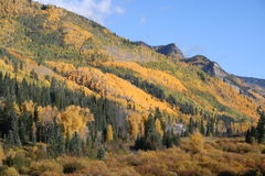 Feuillage d'automne du Colorado Photos stock