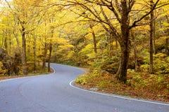Feuillage d'automne du Vermontn images stock