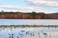 Feuillage d'automne en flanc de coteau du New Jersey, lac Photo stock