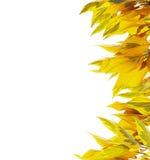Feuillage d'automne, frontière verticale, d'isolement sur le blanc Image libre de droits