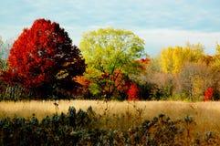 Feuillage d'automne : grands arbres. Image libre de droits