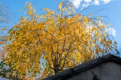 Feuillage d'automne jaune pendant des branches d'arbre, parmi un ciel bleu un jour ensoleillé d'automne dans le Sleepy Hollow, n photo libre de droits