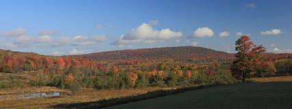 Feuillage d'automne la Virginie Occidentale Photographie stock libre de droits