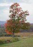 Feuillage d'automne la Virginie Occidentale Images libres de droits