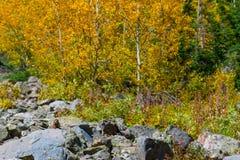Feuillage d'automne sauvage le Colorado de Marmot Photos stock