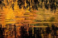 Feuillage d'automne se reflétant dans l'étang Photo stock