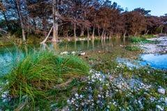 Feuillage d'automne sur la rivière clair comme de l'eau de roche de Frio dans le Texas photo libre de droits