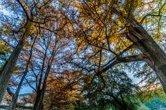 Feuillage d'automne sur la rivière clair comme de l'eau de roche de Frio dans le Texas photos libres de droits