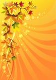 Feuillage d'automne sur un fond solaire Photographie stock libre de droits