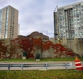 Feuillage d'automne sur un mur image libre de droits