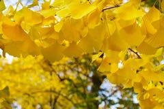 Feuillage d'automne vibrant Photo libre de droits