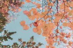 Feuillage d'automne vibrant Photographie stock libre de droits