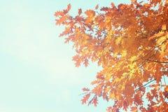 Feuillage d'automne vibrant Photos stock