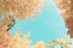 Feuillage d'automne vibrant Photos libres de droits