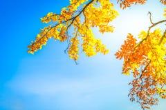 Feuillage d'automne vibrant images libres de droits