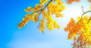 Feuillage d'automne vibrant images stock