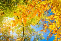 Feuillage d'automne vibrant photo stock