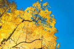 Feuillage d'automne vibrant image libre de droits