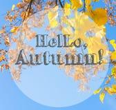 Feuillage d'automne vibrant image stock