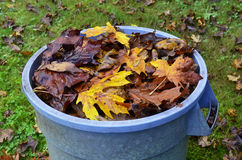 Feuillage d'automne vibrant dans la boîte de bleu Photos libres de droits