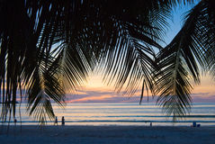 Feuillage de coucher du soleil Photo libre de droits