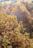 Feuillage de dessus d'arbre d'automne Photos libres de droits