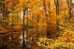 Feuillage de hêtre d'automne se reflétant dans le marais de forêt Photographie stock libre de droits