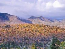 Feuillage de montagne Photographie stock