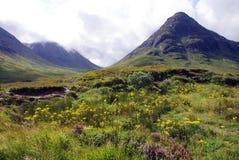 Feuillage de montagne Images stock