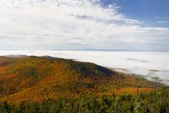 Feuillage de montagne Photos libres de droits