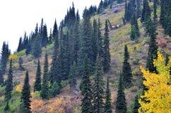 Feuillage de montagne de Hillside Image stock