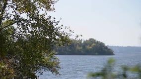 Feuillage de ondulation sur l'arbre avec le vent violent clips vidéos