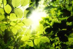 Feuillage encadrant le soleil Photos stock