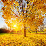Feuillage ensoleillé d'automne Image libre de droits