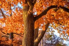 Feuillage et écureuil d'automne Photos stock