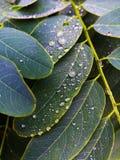 Feuillage imbibé par pluie Photo stock
