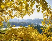 Feuillage jaune Photo libre de droits
