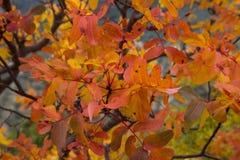 Feuillage lumineux d'automne photo libre de droits
