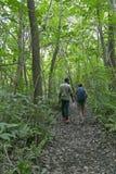 Feuillage luxuriant de forêt de Jozani, Zanzibar, Tanzanie Image libre de droits