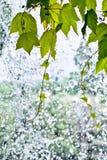 Feuillage sur une cascade à écriture ligne par ligne Images stock