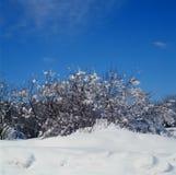 Feuillage tacheté par neige Photo stock