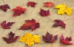 Feuillage tombé sur une vieille toile de jute Milieux abstraits d'automne Photo stock