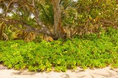 Feuillage tropical à la baie d'amitié, Bequia Photographie stock libre de droits