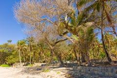 Feuillage tropical à la plage d'amitié, Bequia Photographie stock